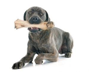 healthy bones for dogs to chew