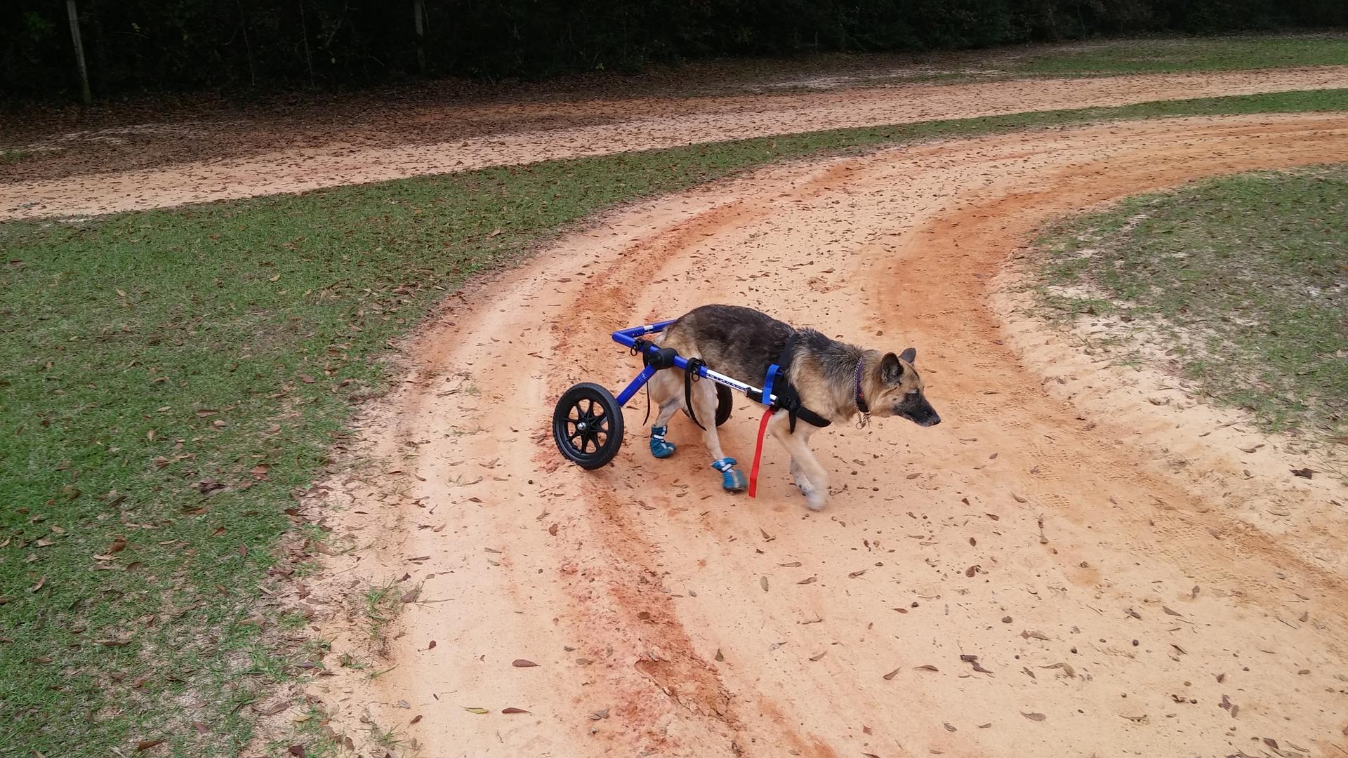 Puppy Mill Survivor