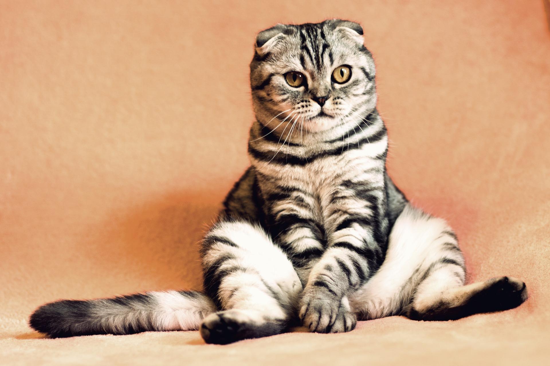 cat sitting like human