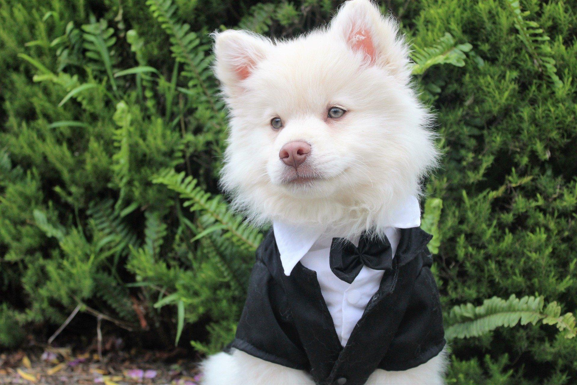 dog wedding dress ideas