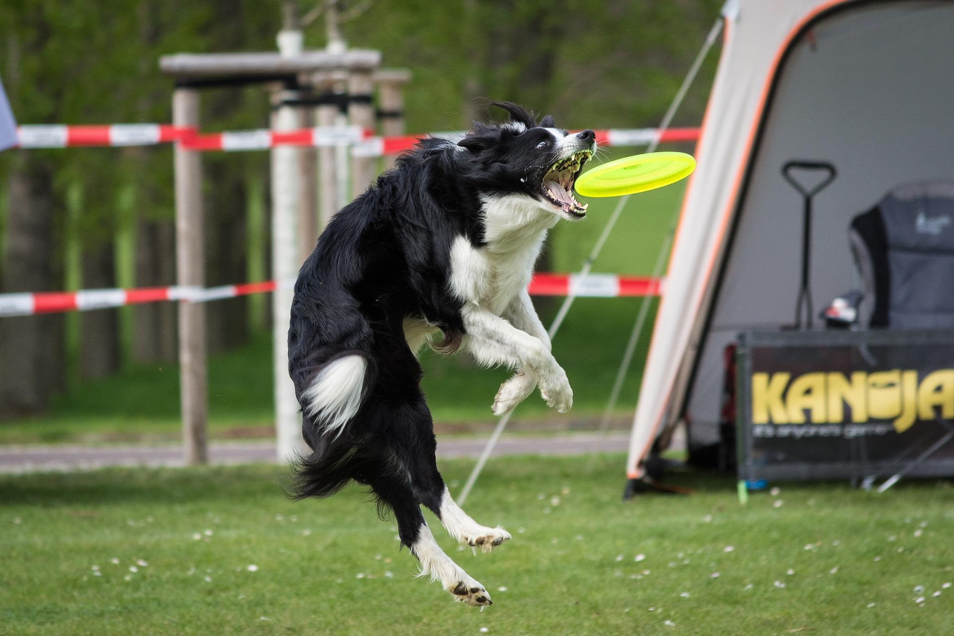 Dog Sports