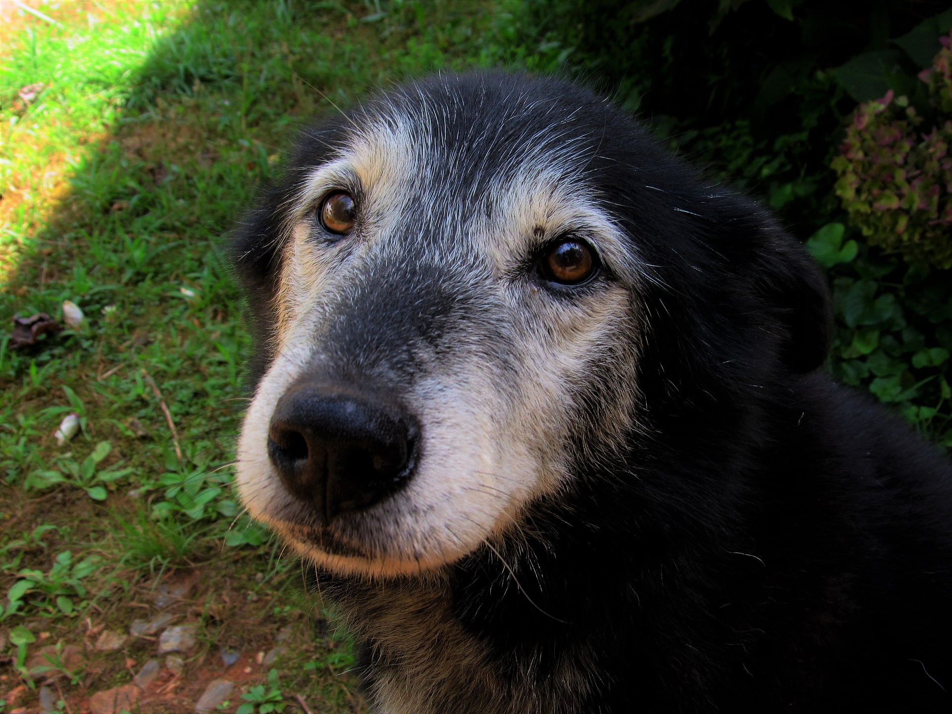 Old Dogs Need Love
