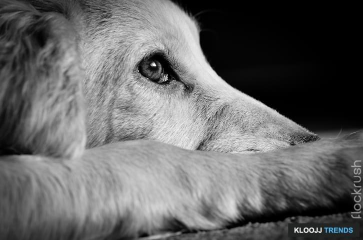 animal cruelty organizations