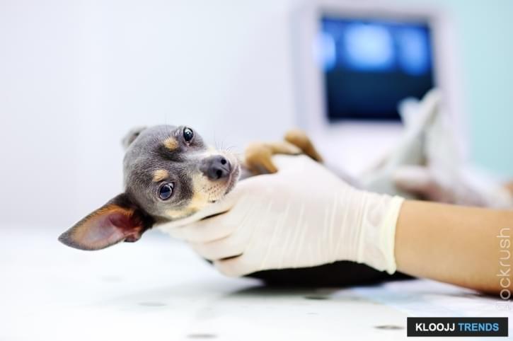 stop dog abuse