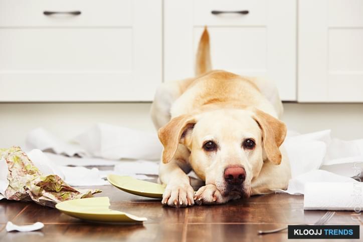 anxious dog behavior