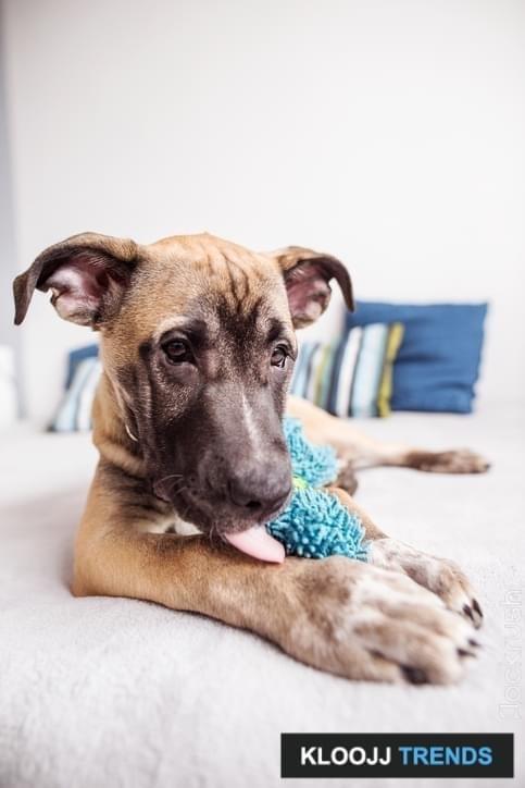 best chew bones for dogs