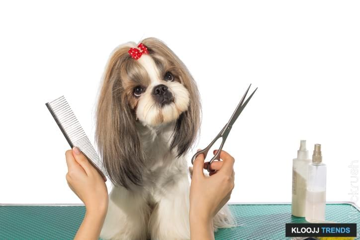 best pet grooming