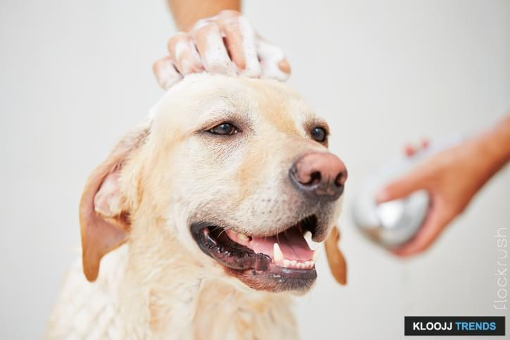 best dog grooming