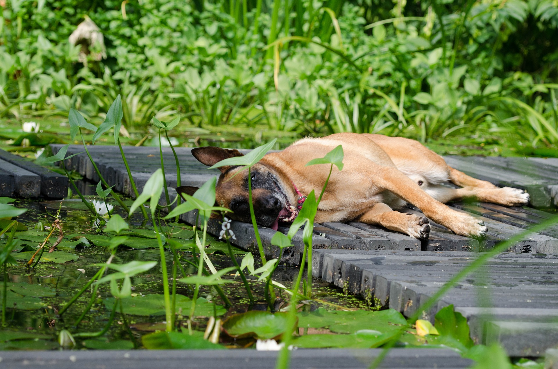 how do dogs stay cool