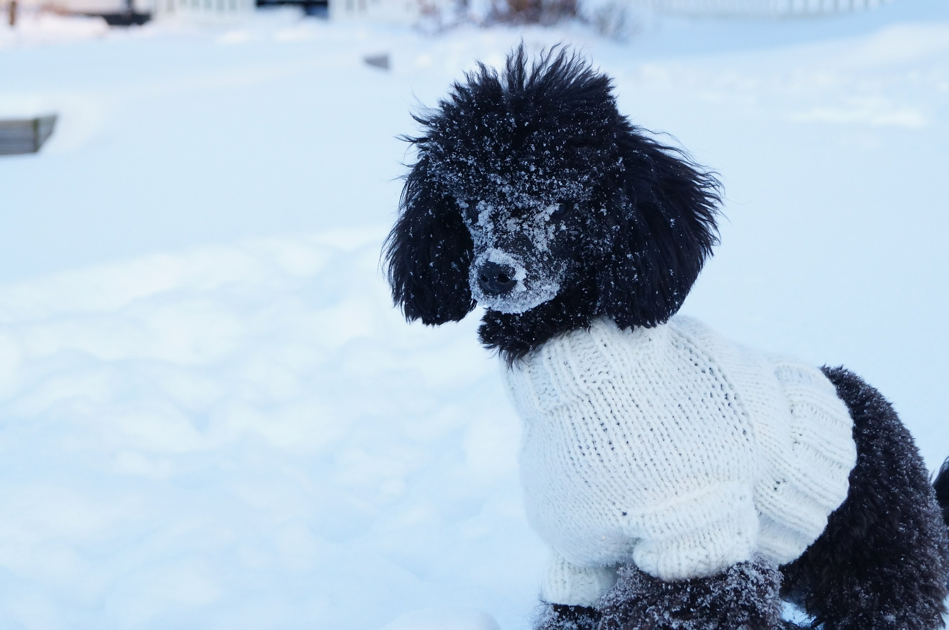 dress your dog for cold weather