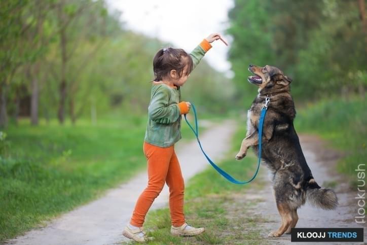 dog behavior training classes