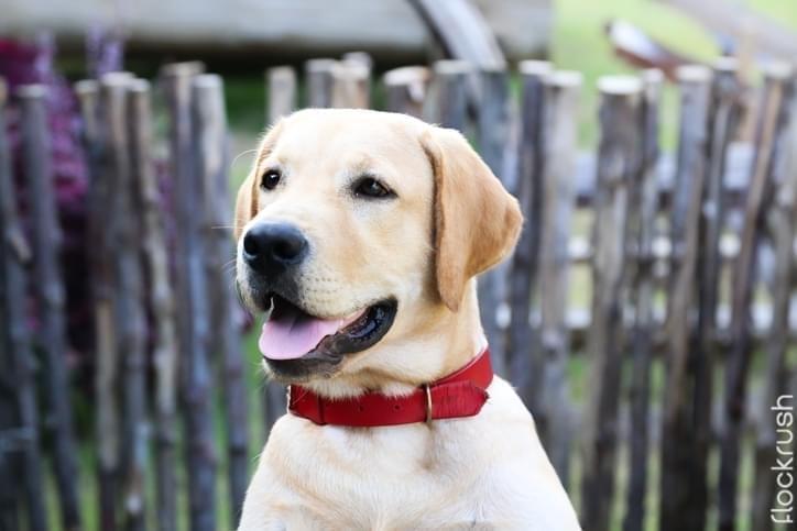 dog collar brands
