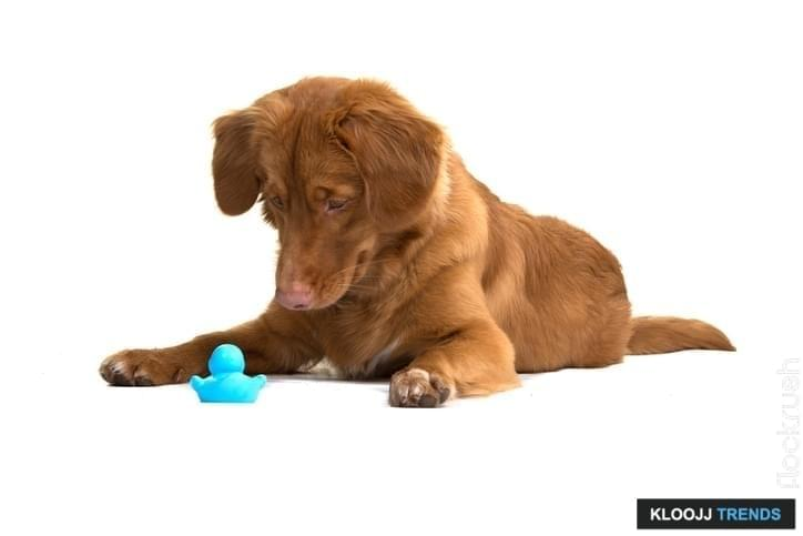 plush squeaky dog balls