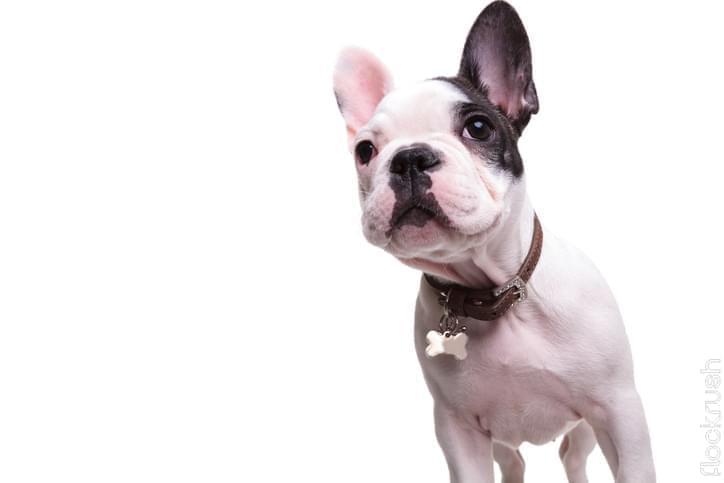 the dog collar