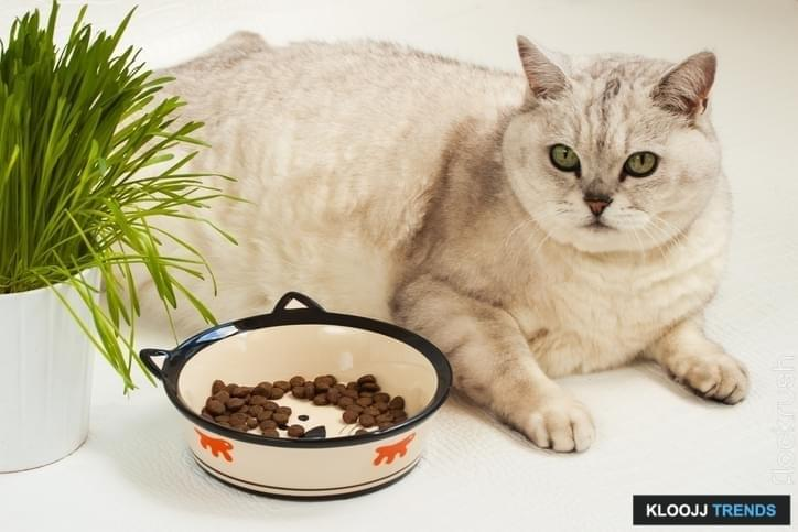 putting cat on diet