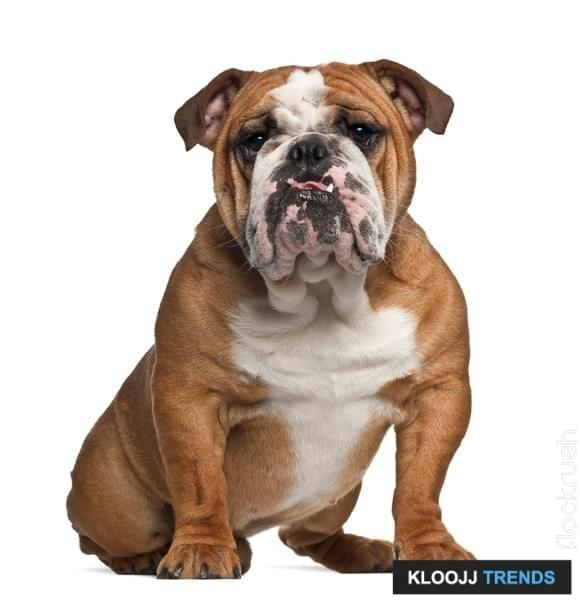 best medium sized dog breeds for apartment living