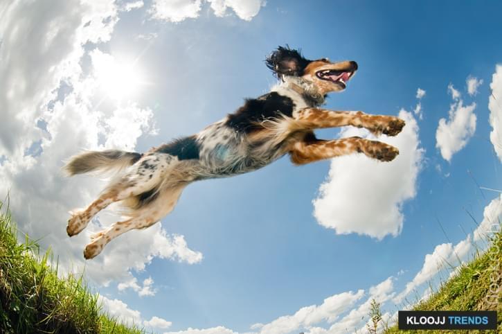 dog agility flooring