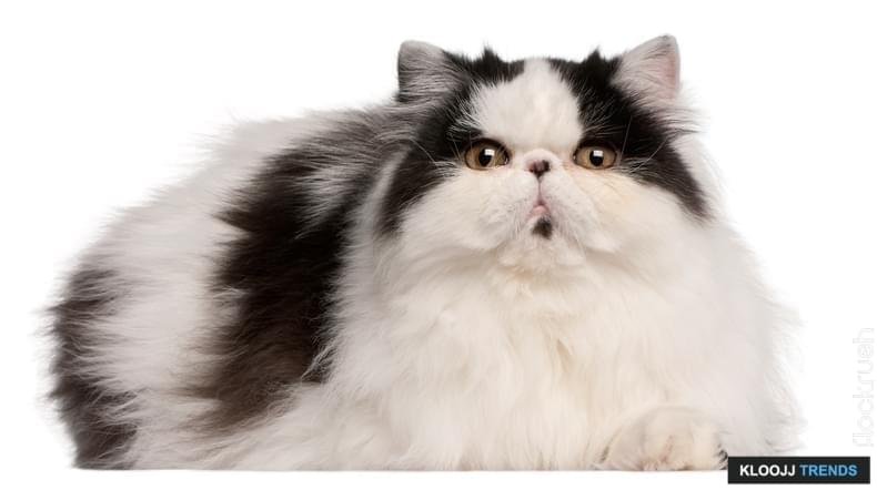 avg cat weight