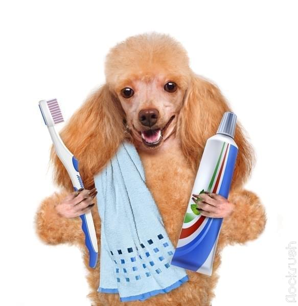 natural dog teeth cleaning