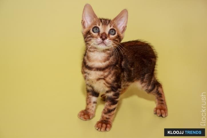 can you domesticate a feral cat