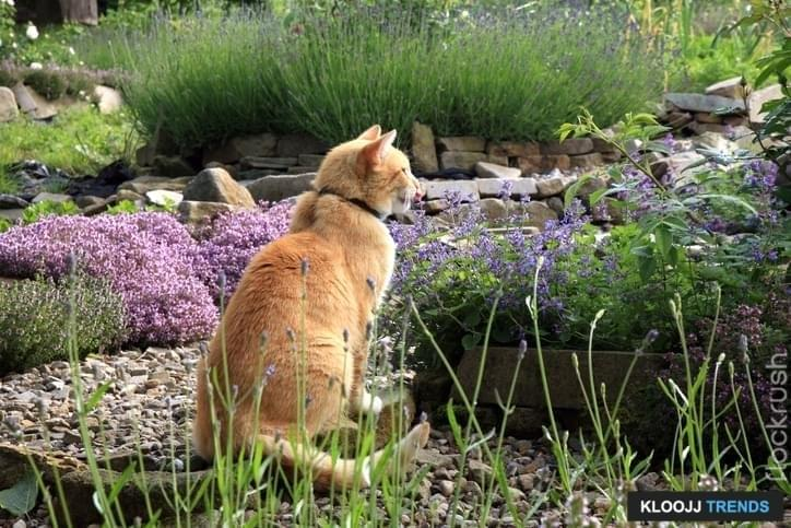 cat friendly garden plants