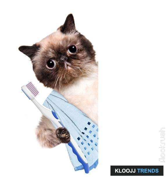 cat dental surgery recovery