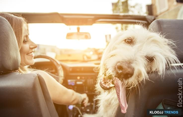 how to care for a dog in heat