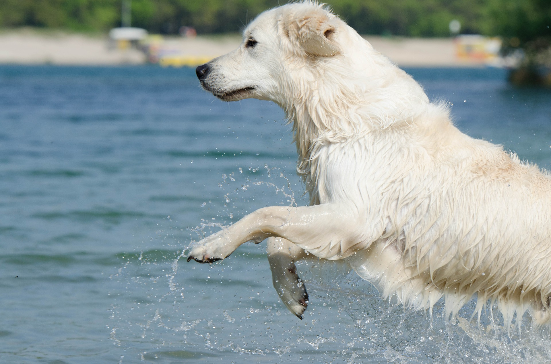 keep your pooch cool during summer