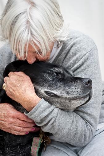 elderly dog adoption