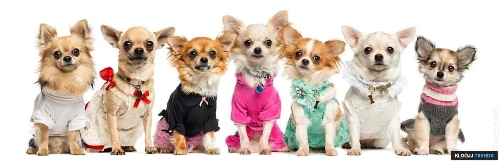 pink dog collars
