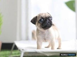 cute tiny dogs