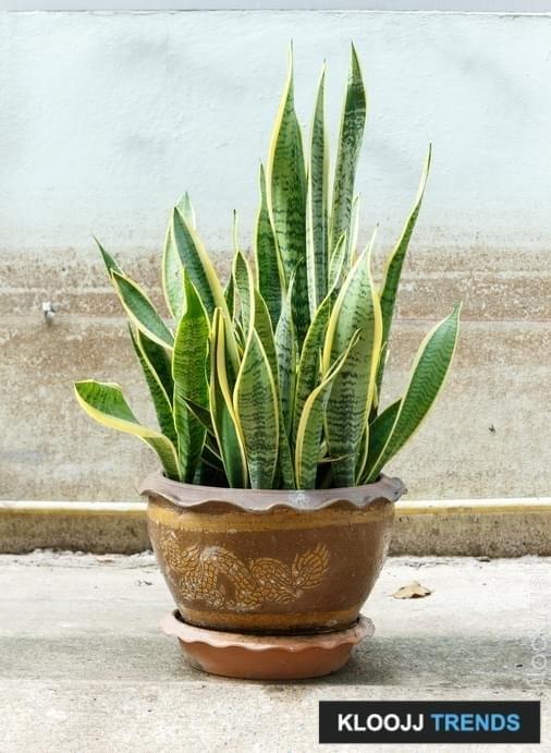 aspca toxic plants
