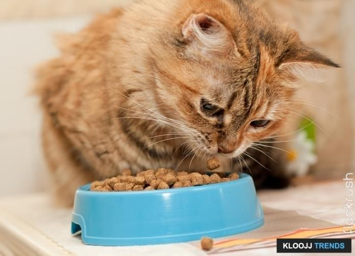 indoor cat food