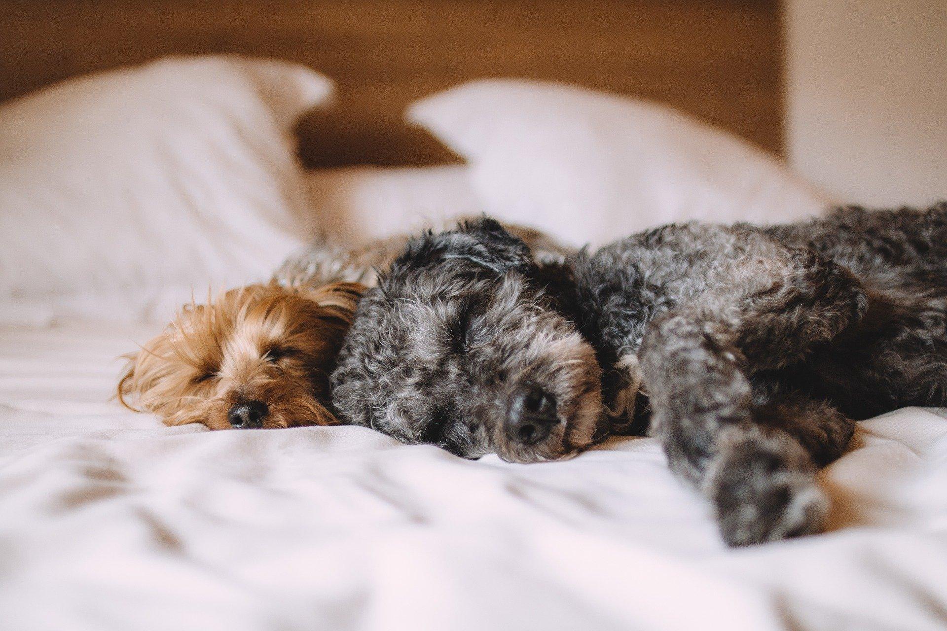 puppy sleeping habits