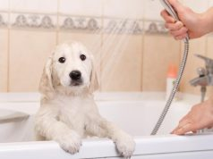 how often should you bathe your puppy