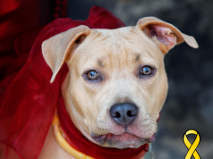 What Does a Yellow Ribbon on a Dog Mean?