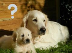 FAQ Dog Questions