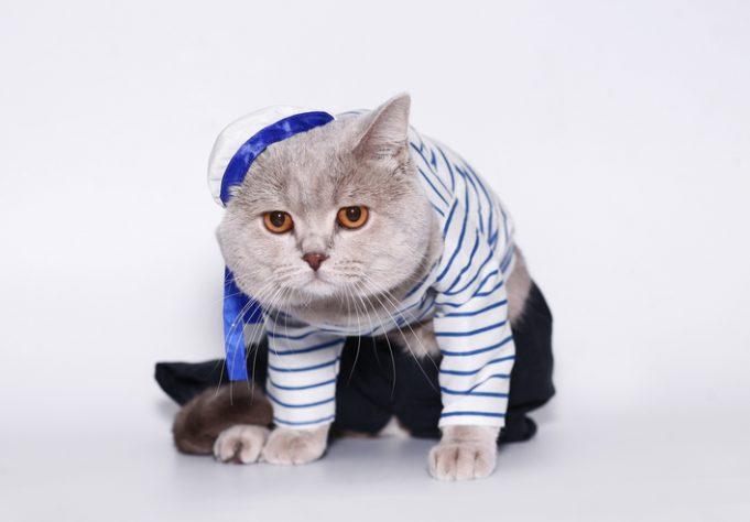 cat harness bungee leash