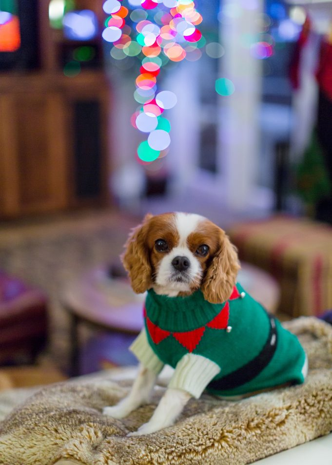 Do dogs really need sweaters