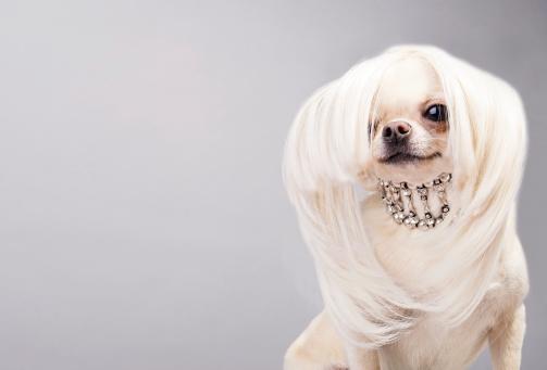 cute large dog collars