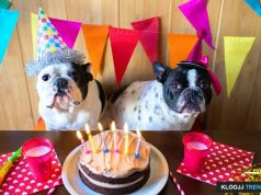 dog birthday party food for humans