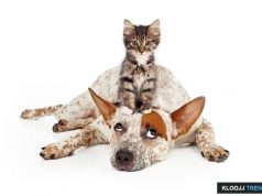 why are dogs afraid of cats