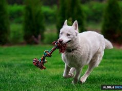 dogs and toys