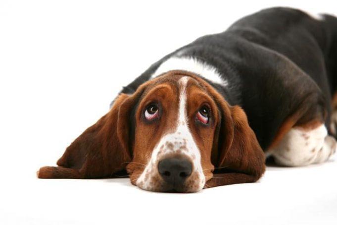 dog shame signs