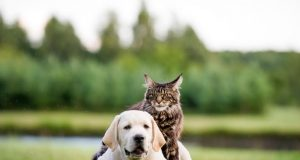 what animals make the best pets