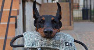 top ten best dogs