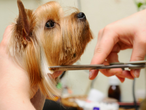 best way to cut dogs hair