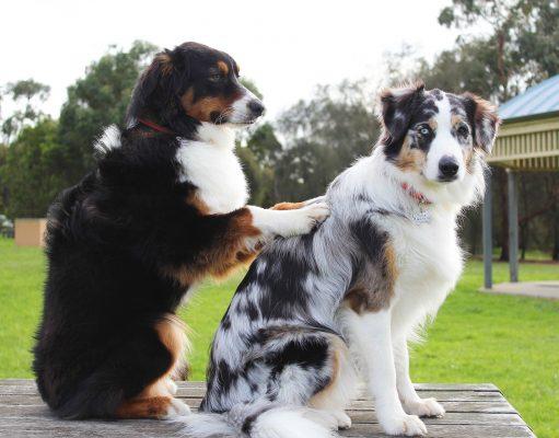 Dog Treatments