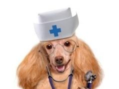 red cross pet first aid
