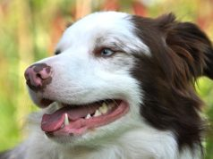How To Clean Your Dog's Teeth Without A Brush